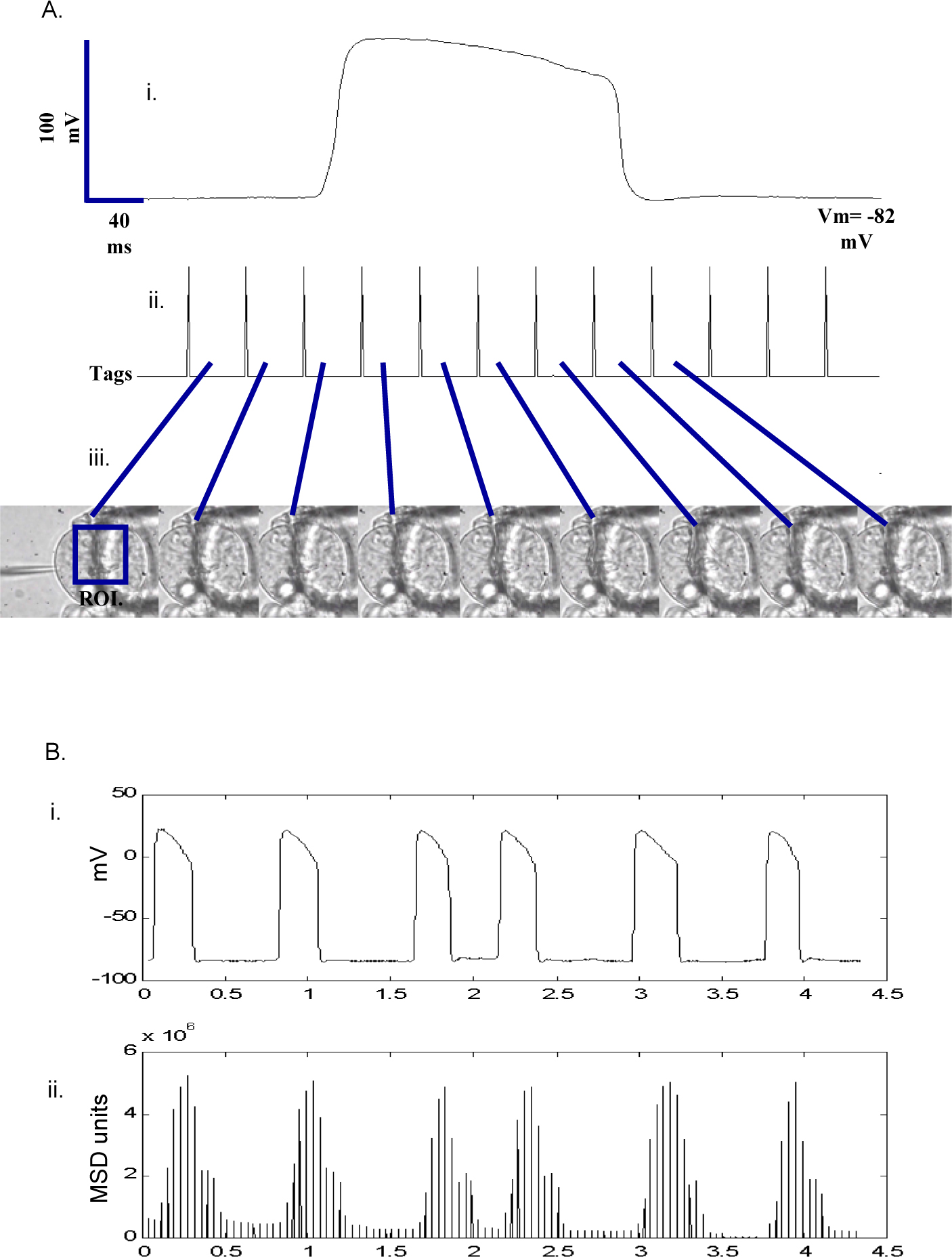 electrophysiological recordings from the pharynx